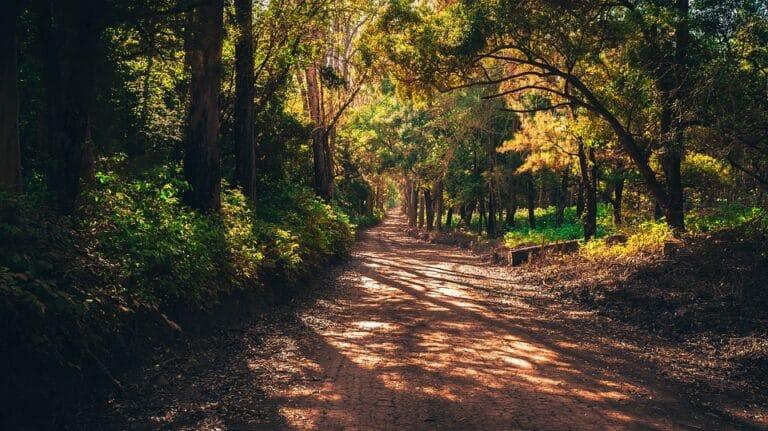 Onderzocht: is lopen op zachte ondergrond echt beter?