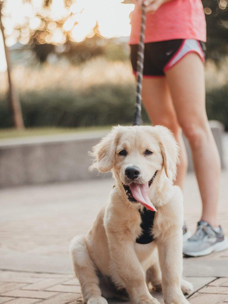 Neem je hond mee op training